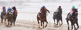 winter horse racing