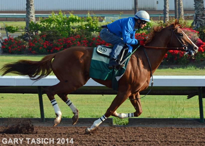 California Chrome working out spring of 2014