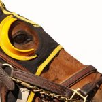 horse racing blinkers