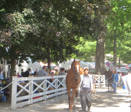 walking horse through Saratoga crowd