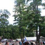 Saratoga paddock copyright Agameofskill.com