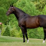 Medaglia d'Oro holds solid Kentucky Derby cards