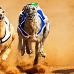 Push underway to bring Greyhound and Horse Racing back to Kansas