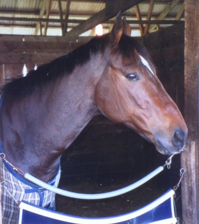 Racehorse Booked Up owned by Rich Nilsen