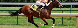 How Technology Reshapes the Horse Racing Industry