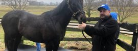 Kentucky fan's tribute to his favorite player? Naming a horse after him, of course.