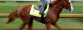 Memphis horse racing syndicate led by Rhodes College professor gambles on Preakness Stakes