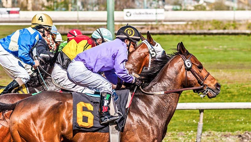 What We're Learning From Horse Racing Research