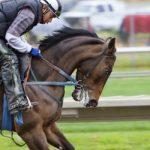 New Zealand horse racing training to resume next week