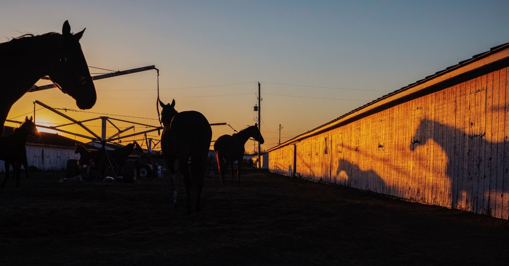 How Sports-Starved Bettors Made a Nebraska Horse Track Must-See TV
