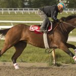 Starship Jubilee has astounded everyone in horse racing, including her trainer
