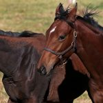 Against most odds: Plotting an unlikely comeback for horse racing