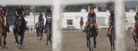Canada bans methadone for race horses