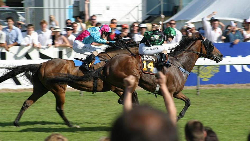 How Horse Racing Enthusiasts Can Plan Ahead for a Future Trip to New Zealand