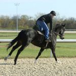Tapeta Surface at Gulfstream Park Nears Completion
